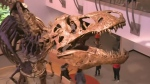 World's biggest T-rex comes to Regina