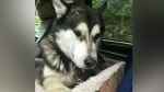 Residents say someone is poisoning dogs in Kyuquot