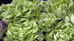 Summer's Farmers Market Opens