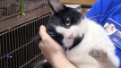 Furry friends looking for home in region