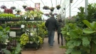 Shoppers will be packed into the city's garden centres over the long weekend to stock up on plants for the season.
