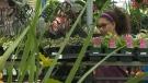 Rain a benefit to Calgary gardeners
