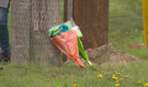 Flowers laid at the site of a car crash that claimed the life of 20-year-old Dallas Campbell.