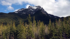 A hiker died after he fell down Heart Mountain near Exshaw on Sunday, May 19, 2019.