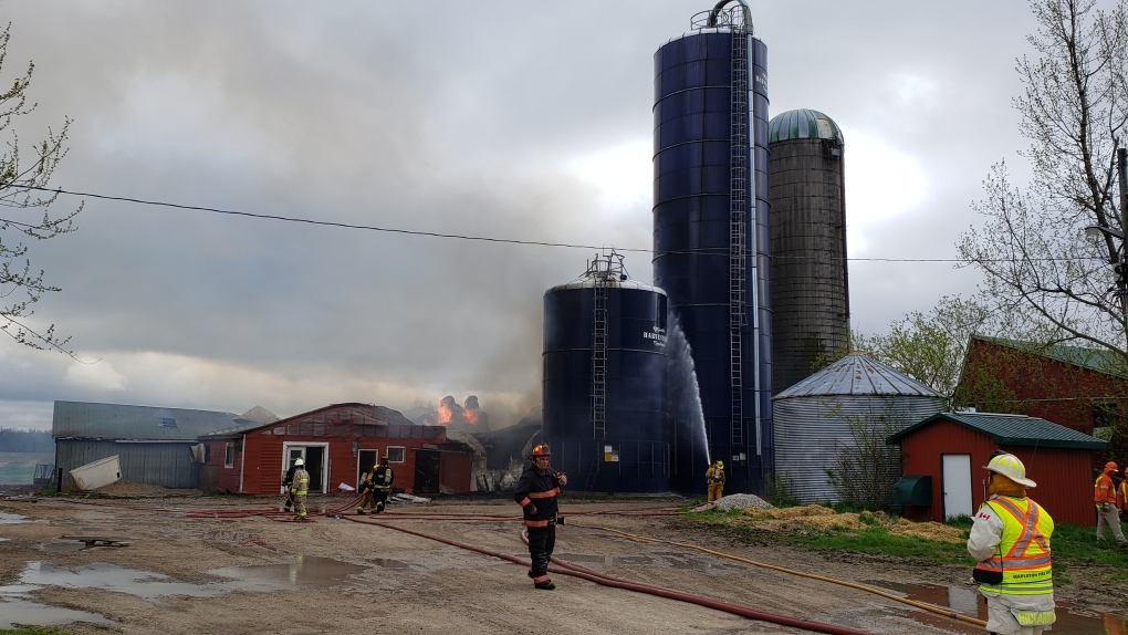Cattle killed in dairy barn fire