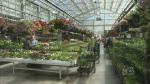 Gardening season opens in Saskatoon