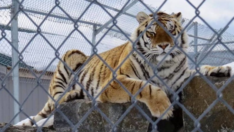 Animal welfare officials say they have arrested the owner of a Quebec's St-Edouard Zoo and are in the process of seizing its animals. (St-Edouard Zoo via Facebook)