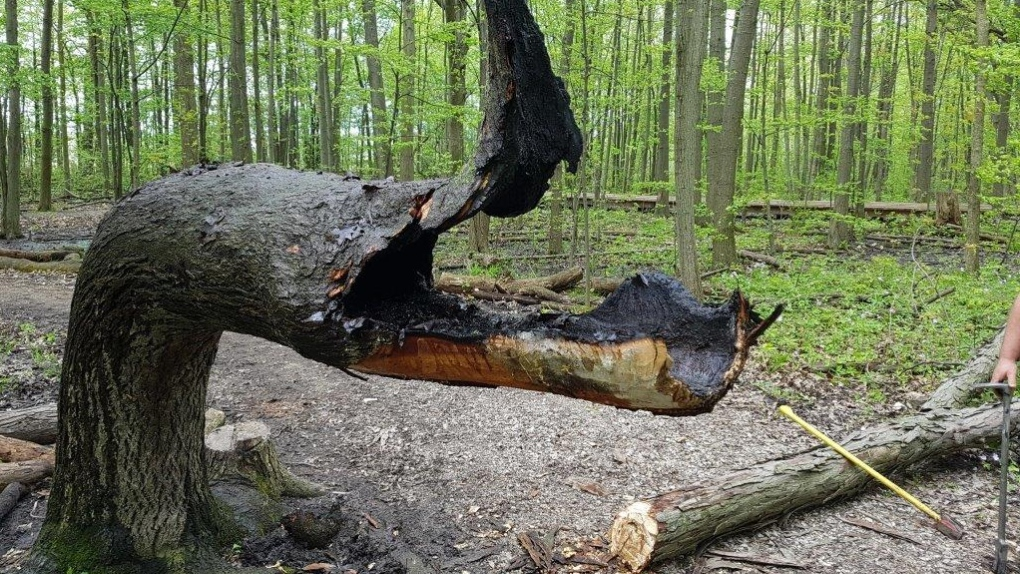'Simply devastating': ERCA officials upset after signal tree destroyed
