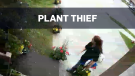 Caught on cam: Woman appears to steal plant