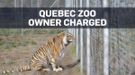 Quebec officials seize lions, tigers and bears