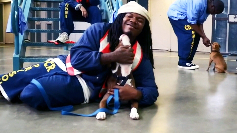 Prison inmates are seen with rescue dogs from the Pawsitive Change program.