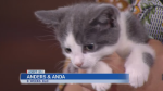 SPCA on Chip Your Pet Month