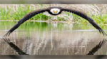 Stunning shot of eagle captured in Windsor, Ont.