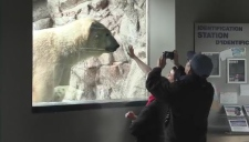 Cochrane Polar Bear Habitat (Lydia Chubak/CTV Northern Ontario)