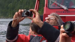A tourist takes a photo on a whale-watching tour off Campbell River, B.C., May 23, 2019. (CTV Vancouver Island)