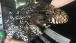 The expo, which has run in Calgary for over 15 years, has special area for young kid to get up close with the reptiles.