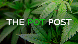 The Pot Post