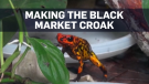 Beating the black market for rare Colombian frogs