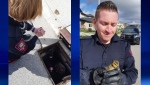 CPS Const. Blake Springman went above and beyond while on duty by going down below to rescue seven goslings stuck down a drain in Royal Oak. He then released them at a nearby pond with their mother duck. (Source: Calgary Police Service)