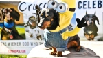 A dog dressed in a costume is seen at a Woofstock event in Toronto. (Courtesy: Woofstock)