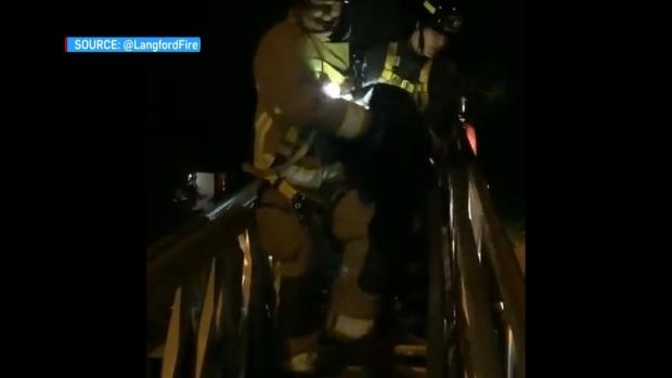 Langford bear rescue