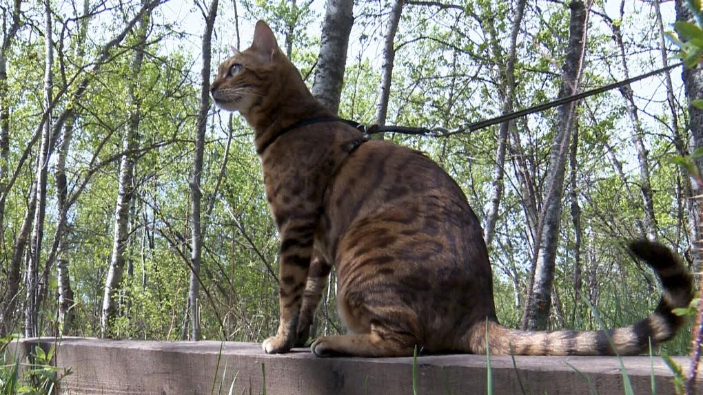 Alberta's 'Suki the Adventure Cat' is latest Internet sensation