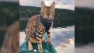 CTV National News: Famous feline