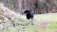 Bear encounter caught on camera
