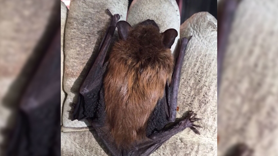 A New Hampshire man was surprised when he discovered a bat hiding in his iPad case.