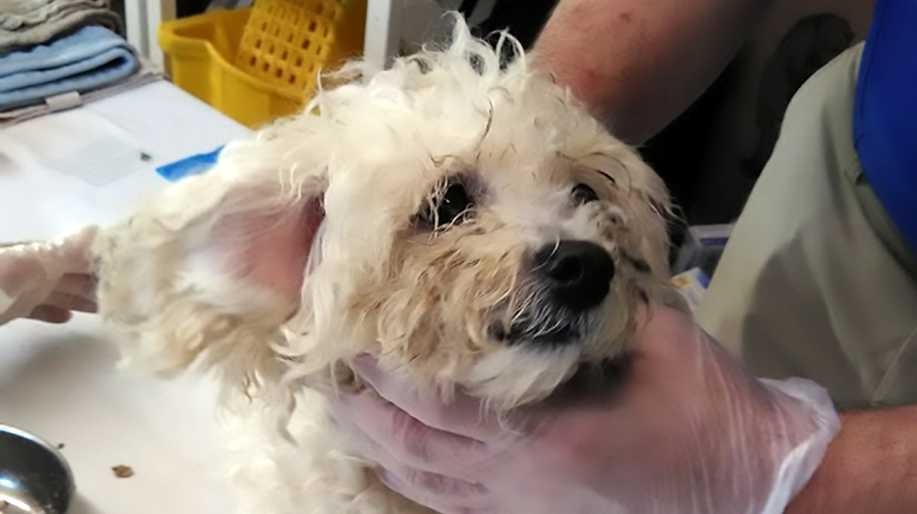 15 dogs seized from Fraser Valley 'puppy mill': BC SPCA