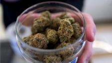In this Feb. 7, 2019, file photo, a bud tender shows a top cannabis strain at Serra, a dispensary in Portland, Ore. (AP Photo/Richard Vogel, File)