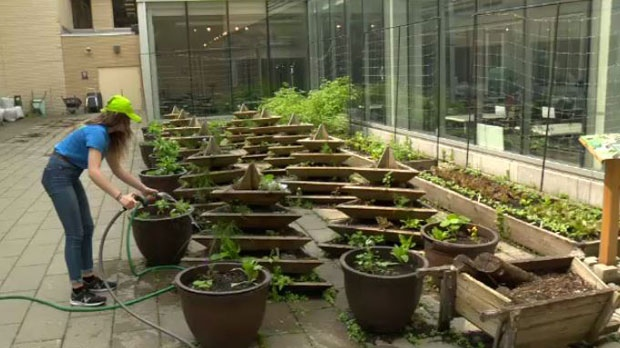 A garden at Dawson College