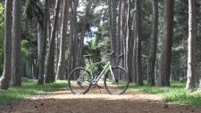 2019 TDR Bike
