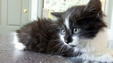 Kitten found discarded in Victoria garbage can
