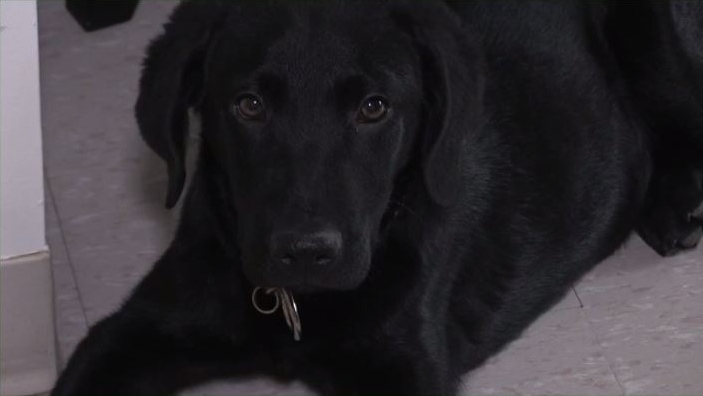Zeus was born in San Antonio, Texas and was rescued from a high-kill shelter.