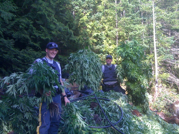 Members of the North Vancouver RCMP bike section stand among marijuana plants in a grow-op discovered on Mount Seymour. August 12, 2009. (Handout photo)