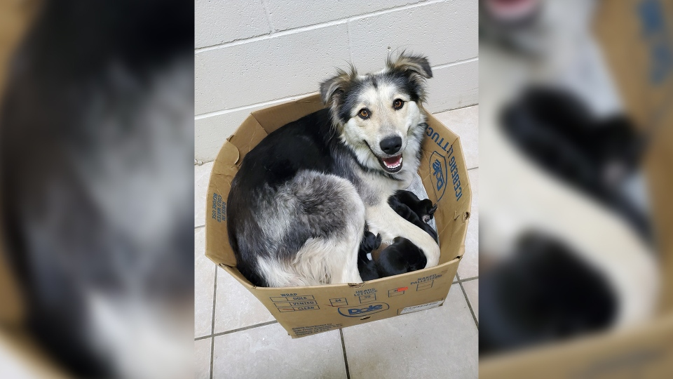 puntzi abandoned dogs