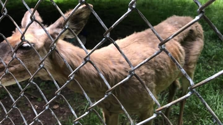 Churchill Park deer raises concerns online, but city says not to worry