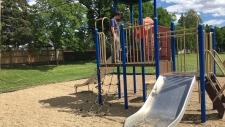 Calgary, playground, razor, blades, Thorncliffe,