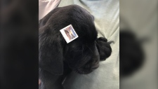 A dog with a stamp attached to his head was left in a cardboard box at the Canada Post outlet in Milo, Alta on May 17, 2019 (Vulcan County Enforcement Services)