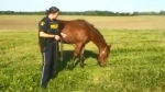 Police in Ontario rescue horse seen running on hig