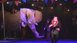 Blyth Festival stages play about Jumbo the elephant