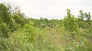 CTV Montreal: Largest urban park