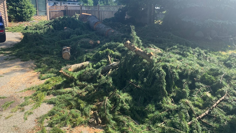 Mystery contractors cut down wrong tree, leaves mess in Surrey