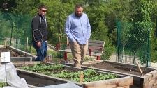 calgary cultivatr farmers market farm