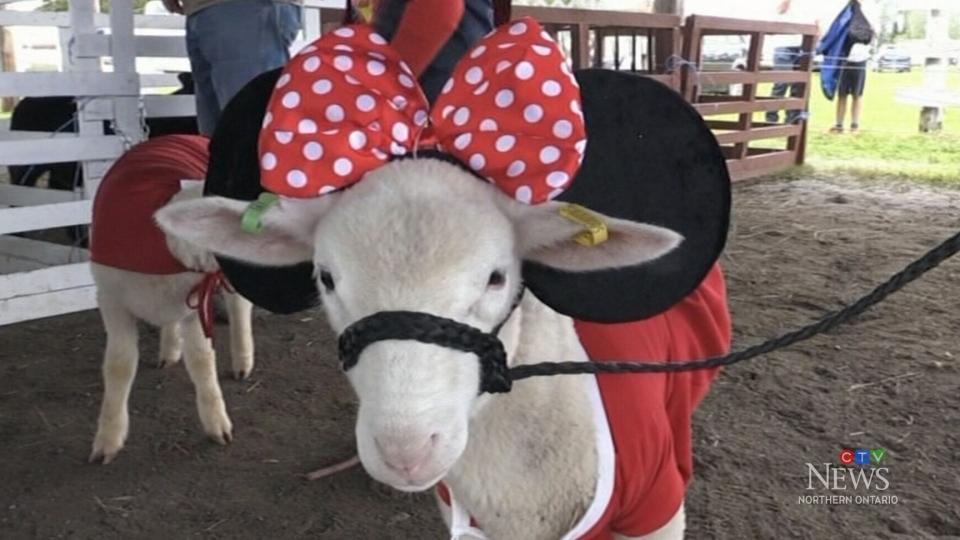 Annual Warren Fair offers family fun