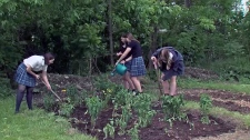 Grade 10 students at Villa Maria High School work on their campus' Technofarm