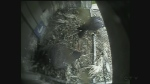 Kawhi flies falcon cam