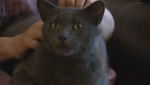Loki the cat was returned to his family after nearly three years away.