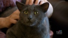 Family reunites with missing cat after years